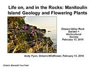 Wildflowers and Geology, Manitoulin by Andy Fyon