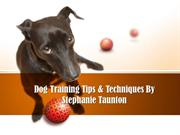 Stephanie Taunton Certified Dog Trainer