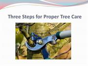 Three Steps for Proper Tree Care