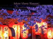 1-Mar 19-Spring Sakura-Cherry Blossoms-Flower & Music of   Japan-Koto