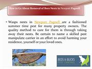 How to Go About Removal of Bees Nests in Newport Pagnell