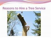 Reasons to Hire a Tree Service