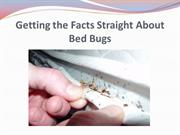 Getting the Facts Straight About Bed Bugs