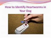 How to Identify Heartworms in Your Dog