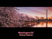 1-Apr 01-Spring in Washington DC-Cherry Festival