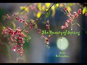 1-Apr 03-Spring-The Beauty of Spring-Music Relaxation