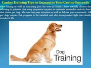 Canine Training Tips to Guarantee Your Canine Succeeds