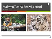 Biology Presentation on Malayan Tiger & Snow Leopard