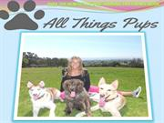 All Things Pups