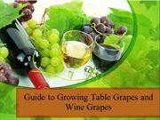 Guide to Growing Table Grapes and Wine Grapes