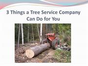 3 Things a Tree Service Company Can Do for You