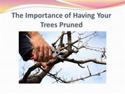 The Importance of Having Your Trees Pruned