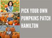 Pick Your Own Pumpkin Patch – Merry Farms Hamilton