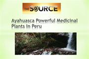 Ayahuasca Powerful Medicinal Plants In Peru