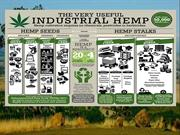 Industrial Hemp On the Grow