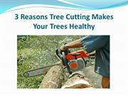 3 Reasons Tree Cutting Makes Your Trees Healthy