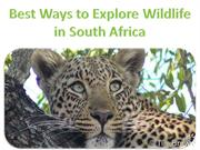 Best Ways to Explore Wildlife in South Africa