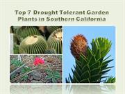 Top 7 Drought Tolerant Garden Plants in Southern California