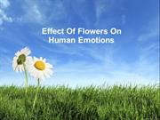 Effect Of Flowers On Human Emotions