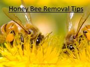 Honey Bee Removal Tips