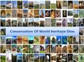 Conservation Of Historical Sites