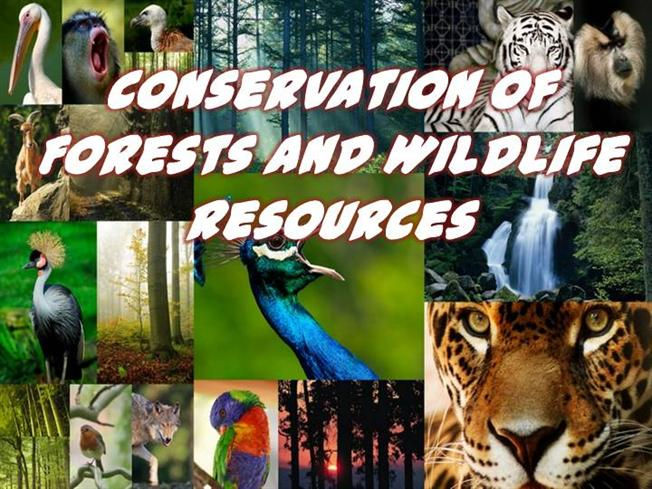 how to conserve forest and wildlife