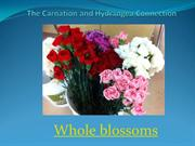 The Carnation and Hydrangea Connection