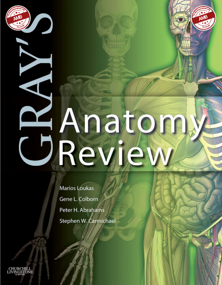 Grays Anatomy Review Authorstream