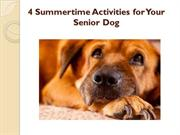 4 Summertime Activities for Your Senior Dog