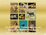 NICE  PICTURES  OF  ANIMALS