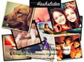 Instagram Feeds and Slideshows Makers for Events by Hashslider