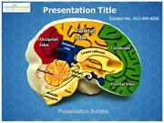 Brain Anatomy Parts Medical PowerPoint Template