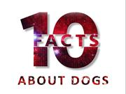 10 Interesting Things that You should be Aware of Dogs