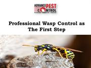 Professional Wasp Control as The First Step