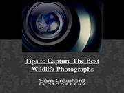 Tips to Capture The Best Wildlife Photographs