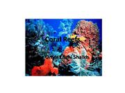Coral Reefs-OMER