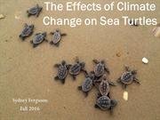 The Effects of Climate Change on Sea Turtles