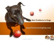 Skin Disease in Dogs
