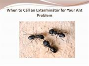 When to Call an Exterminator for Your Ant Problem