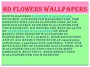 Flowers Wallpapers | Flowers HD Wallpapers