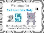 Cat Boarding Services West Palm Beach