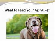 What to Feed Your Aging Pet