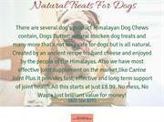 Natural Treats For Dogs