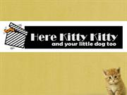 Get Personalized Leather Cat Collars