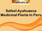 Safest Ayahuasca Medicinal Plants In Peru