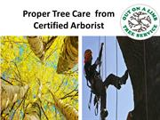 Proper Tree Care and Maintaince
