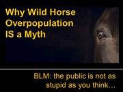 Why Wild Horse Overpopulation is a Myth