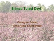Caring for Tulasi in the Home Environment