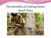 The Benefits of Cutting Down Dead Trees