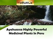 Ayahuasca Highly Powerful Medicinal Plants In Peru